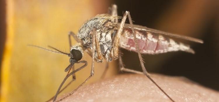 Zika Virus Information