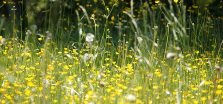 The History of Hay Fever