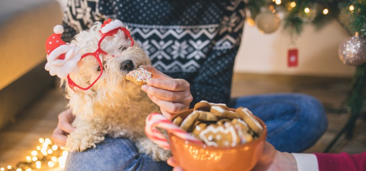 Pet Safety at Christmas